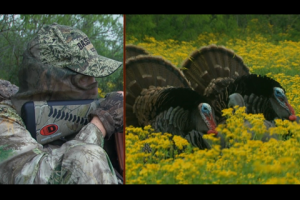 1Source Video: Wide Open Turkey Hunting in Texas