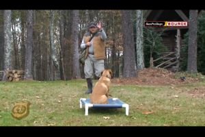 1Source Video: Hunting Dog Training: Place Board Drill