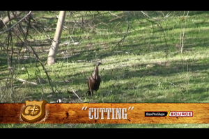1Source Video: Learn the Cut Call to Locate and Seduce Wild Turkeys