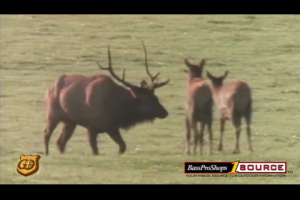 1Source Video: Elk Management with J Wayne Fears