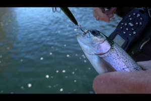 1Source Video: Tip: Trout Like Long Slender Crankbaits