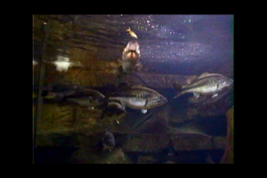 1Source Video: Learn About Giant Fish Aquariums
