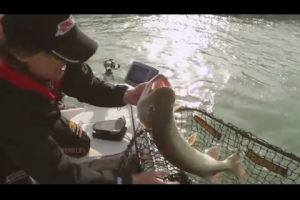 1Source Video: Fishing Tip - New Berkley Trilene Braid for Muskies and Pike