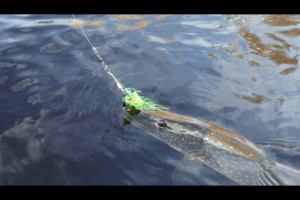 1Source Video: Trolling Spinner Baits for Pike