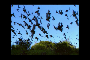 1Source Video: Cool Facts About Bats