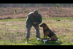 1Source Video: Gundog Training:  Water Retrieving Drill