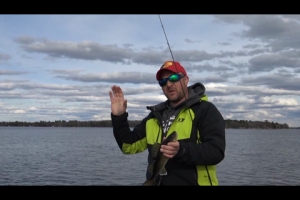 1Source Video: Target The Reeds For Walleye and Pike in The Spring Time