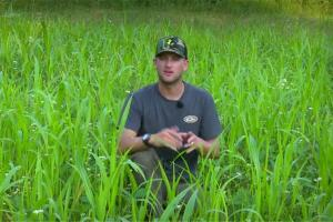 News & Tips: Easy Food Plots and Deer Hunting Strategies  (video)...
