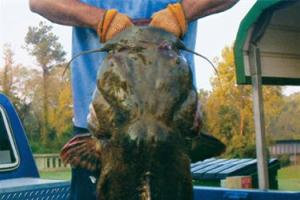 News & Tips: Key to Catfishing Streams, Creeks & Rivers...