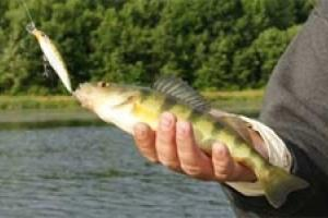News & Tips: 3 Great Hard Baits for Late Summer Panfish...