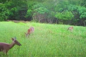 News & Tips: New Techniques to Manage Food Plots for Better Deer Hunting (video)...