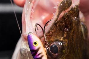 News & Tips: How to Catch Late Summer Walleyes With Shiver Minnows (video)...