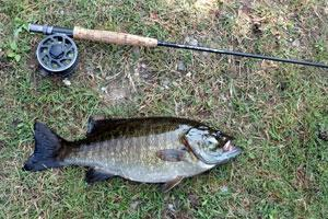 News & Tips: The Inch-Pause Retrieve for Smallmouth Bass Fly Fishing...