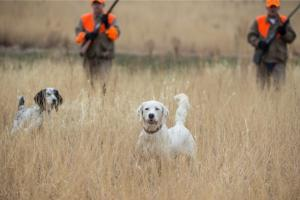 News & Tips: Pheasants and our National Forests Featured on Bass Pro Shops Outdoor World Radio...