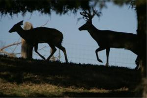 News & Tips: Ask an Unlikely Expert to Locate Big Bucks...