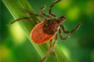 News & Tips: What You Should Know About Ticks and Lyme Disease...
