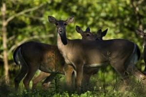 News & Tips: 4 Ways to Help Keep Deer Out of Your Garden...
