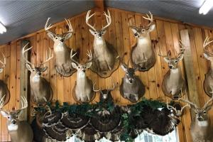 News & Tips: How to Choose the Taxidermy Mount You'll be Happy With for Years to Come...