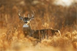 News & Tips: Pre-rut Hunting In Northwest Tennessee...