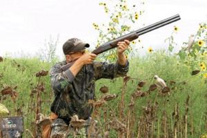 News & Tips: Dove Hunting Basics: Tips to Get You Started...