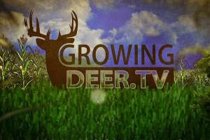 News & Tips: Bow Hunting The Rut: Tagging a BIG Indiana Buck...