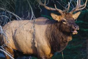 News & Tips: Rocky Mountain Elk Foundation Featured on Bass Pro Shops Outdoor World Radio...