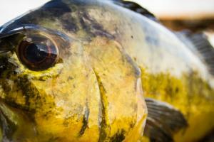 News & Tips: Are You a Warm Weather Angler? Take This Bass Tactics Quiz & Find Out...