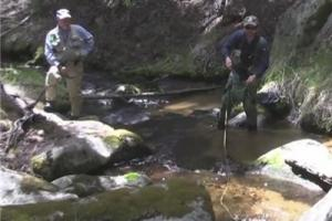 News & Tips: Fishing Greenback Cutthroat Trout in Colorado...