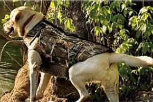 News & Tips: 7 Sure-Fire Ways to Guard Your Hunting Dog From Overheating (infographic)...