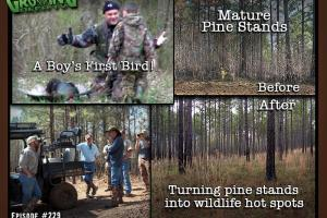 News & Tips: Turkey Hunting in the Pines