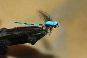 News & Tips: How to Fish the Damsel Dry Fly During Summer Months...