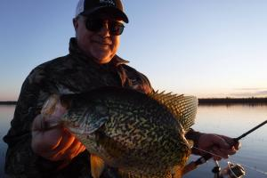 Springtime Crappie From The Reeds