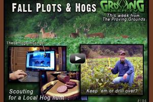 News & Tips: Fall Plots & Hogs