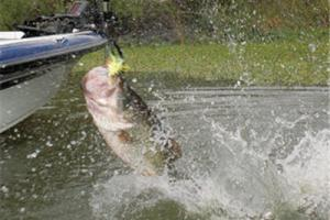 News & Tips: Bass Fishing Tips: How to Use Wobblers Style Lures...