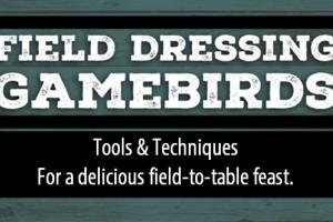 News & Tips: Tools and Techniques No Bird Hunter Should Be Without (infographic)...
