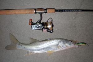 News & Tips: Travel Blog: Snook Fishing in Keewaydin Island, Florida...