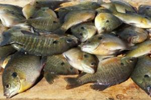 News & Tips: Switch to Jigs to Catch More Panfish