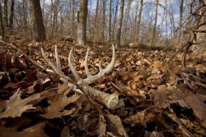News & Tips: 6 Easy Tips for Shed Hunting Success (video)...