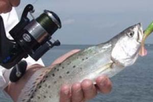 News & Tips: Choosing Saltwater Fishing Gear: Spinning or Baitcasting Reels...
