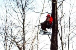 News & Tips: 10 Treestand Safety Tips