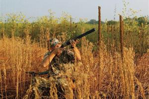 News & Tips: How To Use Structure for Dove Hunting