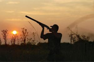 News & Tips: Dove Hunting Basics: Tips on Guns, Loads and Shooting (video)...