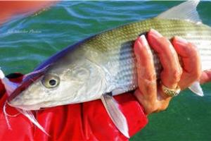 News & Tips: How to Make Saltwater Gamefish Go Wild for Bucktails...