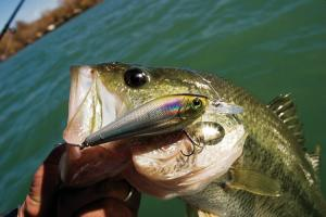 News & Tips: Best Bass Lures for Summer River Largemouth...