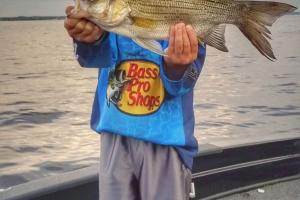 Young angler catching Summer Striper