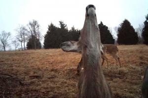 Braggin' Board Photo: Is This Deer Mocking Me?