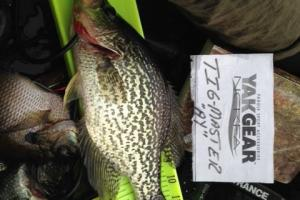 Braggin' Board Photo: Crappie 3  3