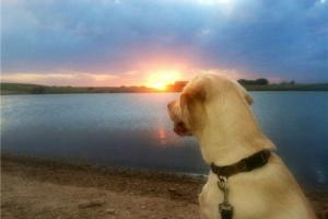 Braggin' Board Photo: Enjoying a Kansas Sunset