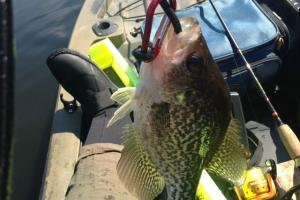 Braggin' Board Photo: Crappie photo 11