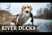 Duck Hunting Rivers